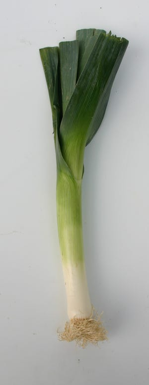 Leeks make a wonderful addition to soups, stews and risottos. They can also be eaten raw in salads.
