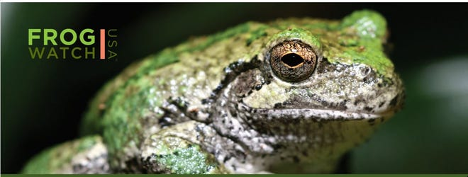 FrogWatch USA uses citizen scientists to monitor frog populations around the country. Training is scheduled locally, starting in two weeks.