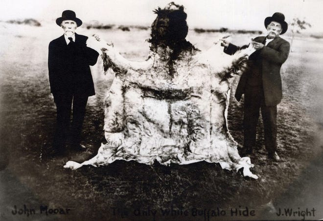 John Mooar, left , and J. Wright Mooar display the hide of the white buffalo Wright killed near Snyder October 7, 1876.