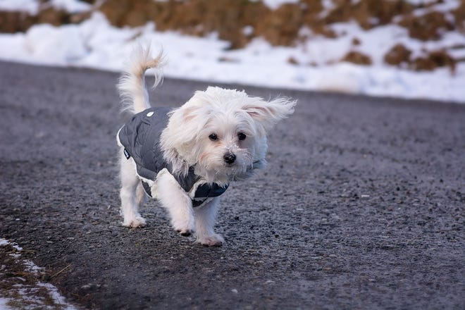 Bathroom breaks or walks, keep it short and sweet and keep your pets indoors as much as possible, ARL says.