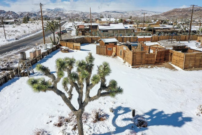 A Joshua tree is surrounded by snow in Pioneertown, January 25, 2021.