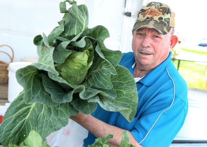 Sam right along side one of his prized collards.