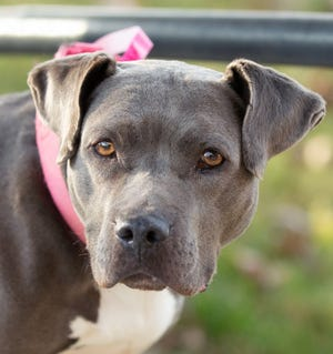 """Friends for Animals of Metro Detroit works to give abandoned or lost animals a loving home. This year, the group is hosting an """"unwanted gift"""" auction where proceeds will go toward the cost of care for more than 2,500 animals."""