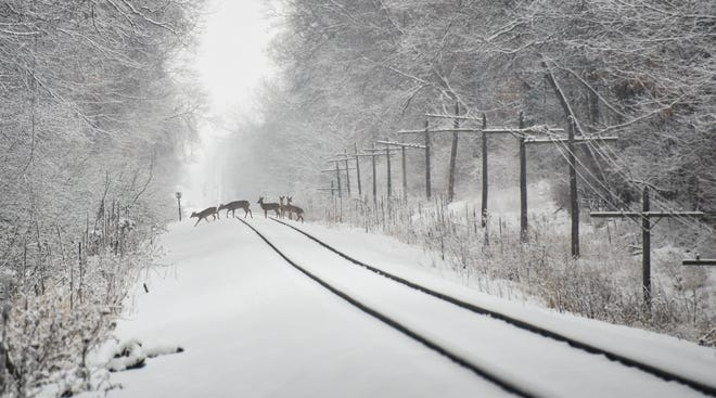 A small herd of whitetail deer cross the railroad tracks near Hulett Road in Meridian Township, Tuesday, Jan. 26, 2021.