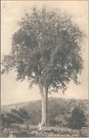 The celebrated, old elm tree on the Bethany Road (Route 670, Elm Place today) stood about 150 feet high and had a trunk seven feet wide. It fell in a storm in 1915. / Wayne County Historical Society