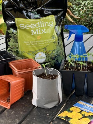 """Though there is an endless list of recipes for the """"perfect"""" seed-starting medium, consider using a commercial seed-starting mix. Unlike garden soil, which may carry disease organisms, seed-starting mixes are sterile. Their light weight and open consistency allow the seeds to more easily germinate."""