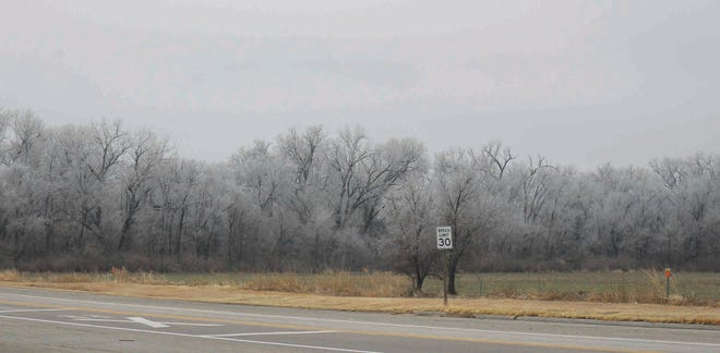 Trees along the Ninnescah River south of Pratt are coated with ice on Monday, January 25 as a winter storm covered much of Kansas. Welcomed moisture was received in Pratt County but snow accumulation did not materialize as predicted.