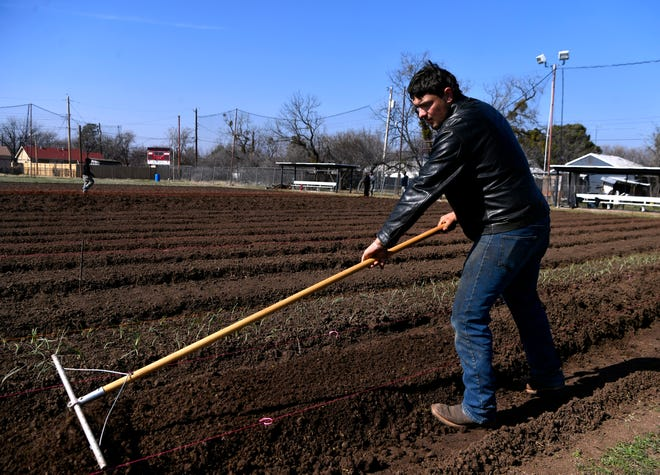 Declan Casey smoothes a row of dirt Wednesday at a small community farm, where the McMurry University soccer field once stood. Abilene Fresh is looking for volunteers to help with planting and other work at the site.