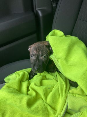 Tipper, the 10-week-old puppy, was rescued in January by a Rumpke Recycling driver.