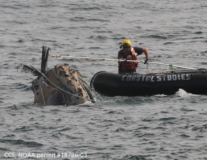 New regulations passed by the Marine Fisheries Commission Thursday are expected to further reduce instances of fishing gear entanglements involving North Atlantic right whales in state waters. The right whale population has reduced significantly in recent years.
