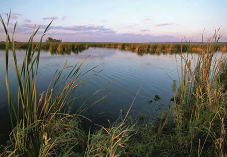 Wetlands are critical to the health of our environment for people and wildlife.