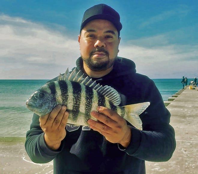 Rob Martinez of Bradenton shows off a keeper size sheepshead he caught from the Cortez Beach Pier on Bradenton Beach last week.