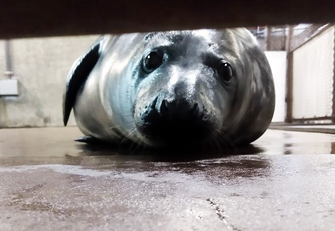 The Louisville Zoo's newest resident, a gray seal pup, has yet to be named.