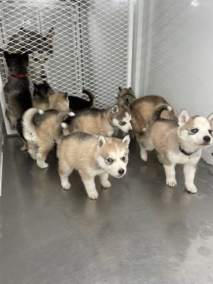 Visalia police and animal control officers rescued a dog and her puppies from a negligent owner at a Motel 6 on Monday.