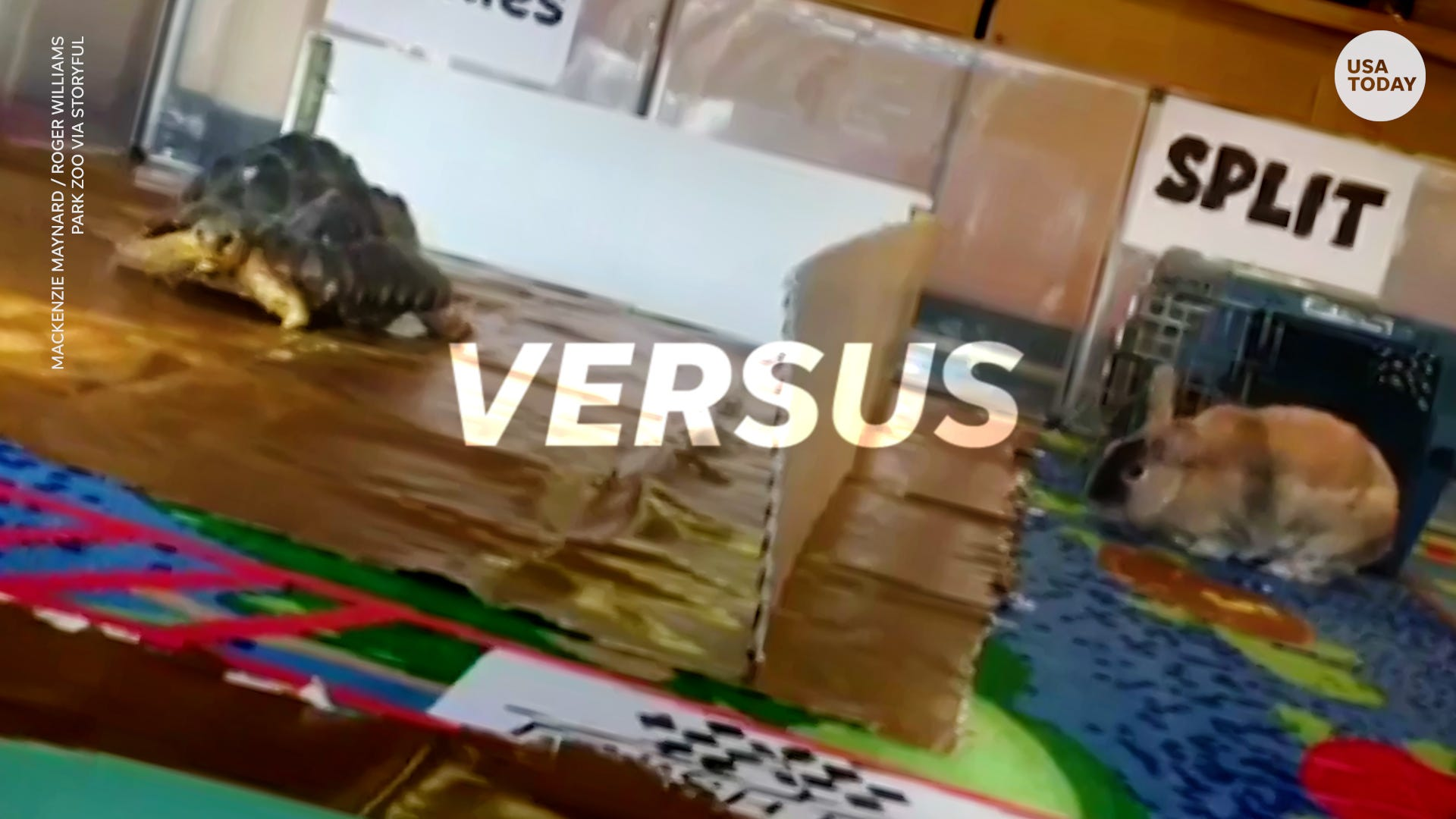 Real life tortoise and hare race to settle fabled tale once and for all