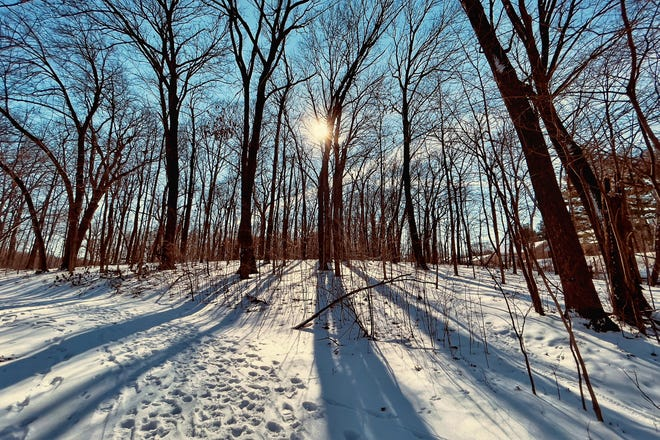 Trees cast shadows on a popular walking path near the Lake Storey boat ramp on Friday, Jan. 29, 2021.