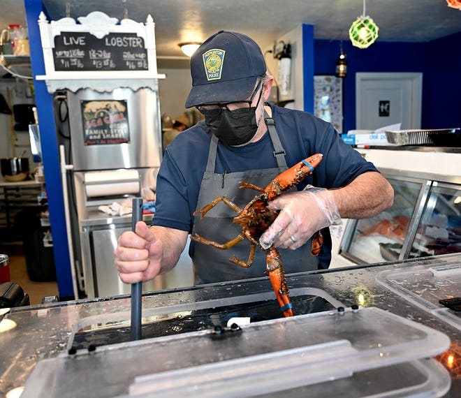 Bill Morgan pulls a lobster from the tank at Morgan's Harbor to Hill, his new seafood store on Lumber Street in Hopkinton, Jan. 29, 2021.