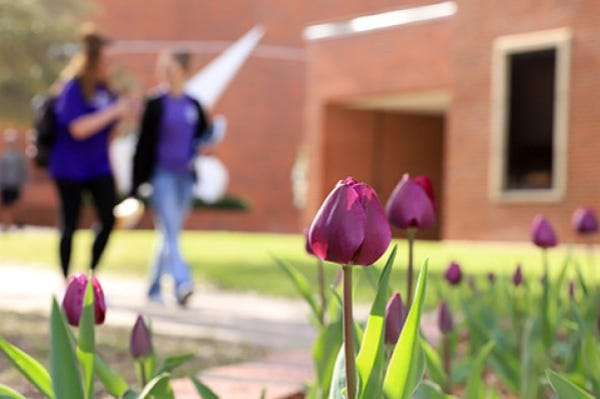 Tarleton is teaming with West Texas A&M and Texas A&M-Corpus Christi for a virtual job fair from 11 a.m. to 2 p.m. Feb. 4.