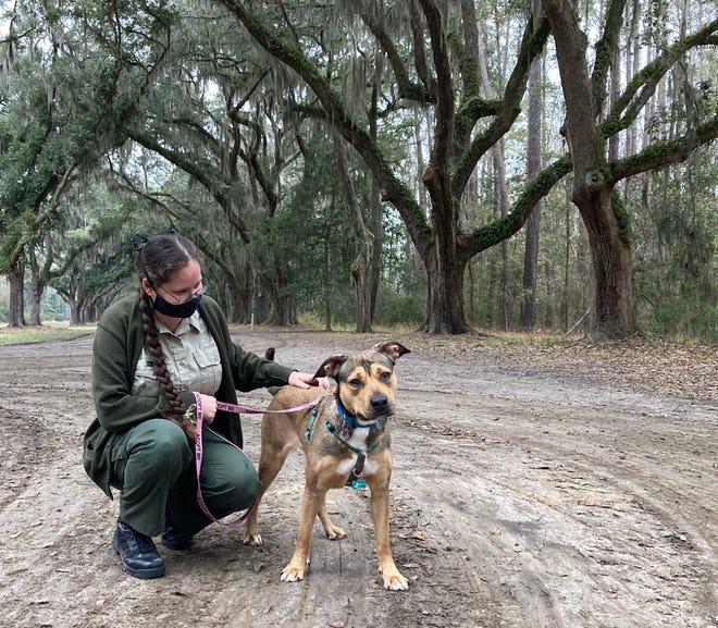 Sara Feltner, Interpretive Ranger, with Bark Ranger Kim at Wormsloe Historic Site.
