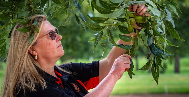 Technology helps Oklahoma pecan growers learn more about their industry.