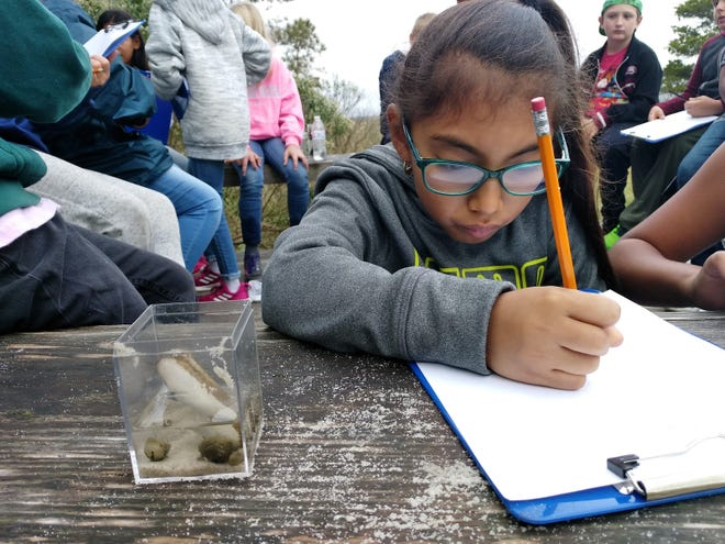 A student of the Day on the Bay program records her observations on a sample collected from Indian River Bay. The new education building will provide more suitable workspace for students, as well as shelter from the elements during inclement weather.