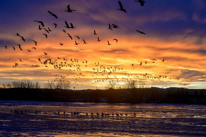 Canada geese fly at dusk Dec. 4, 2019, over Broadwater Bay in Montana.