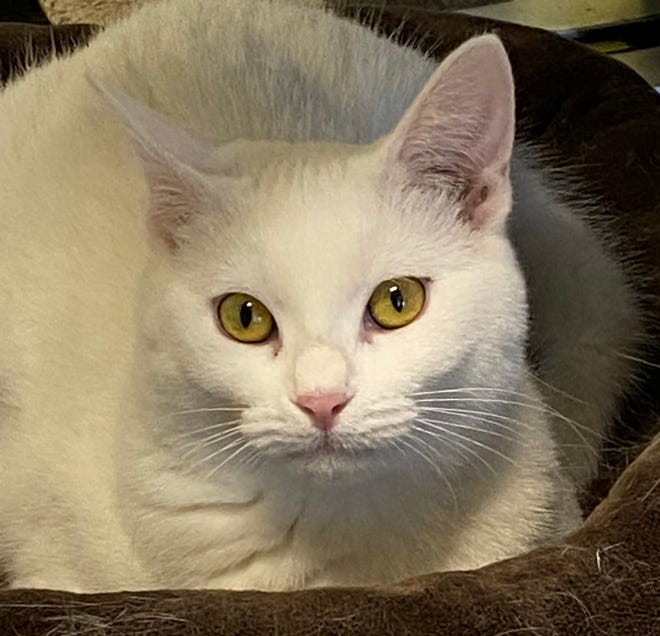 Dazzler and her sister are waiting to meet you at the Oshkosh Area Humane Society.