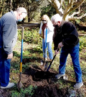 Volunteers Ken and Ardieth Davis and Ken Walling dig a hole for a new tree at Maclay Gardens. The Tallahassee Garden Club received a grant to assist the park in replacing trees damaged by recent hurricanes.