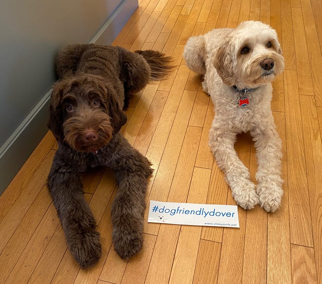 Mocha and Winston are joining their people parents in the #dogfriendlydover and #dogfriendlyportsmouth movement.