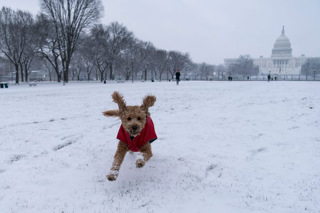 """Rosie"" runs in the snow on the National Mall in front of the U.S. Capitol on Sunday in Washington. The same storm is predicted to hit Connecticut Monday with a foot or more of snow."