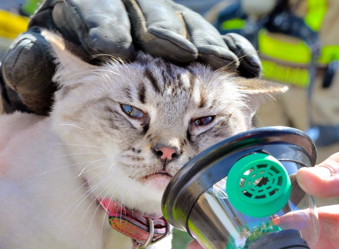 One of two cats rescued from a burning condominium fire in south Melbourne. Photo Credit: Julian Leek.