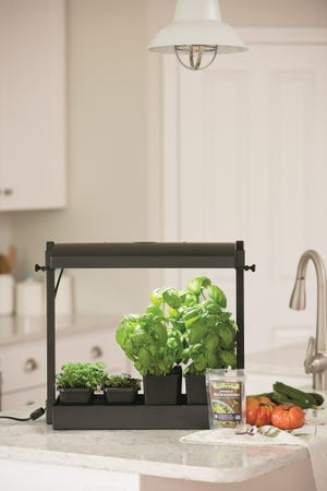Small grow light kits make growing herbs and microgreens indoors easy and convenient for harvesting and cooking.