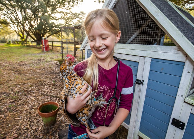 Olivia Walker, 7, giggles while holding her chicken, Dark Stripe, earlier this month. This year's Southeastern Youth Fair begins Feb. 19.