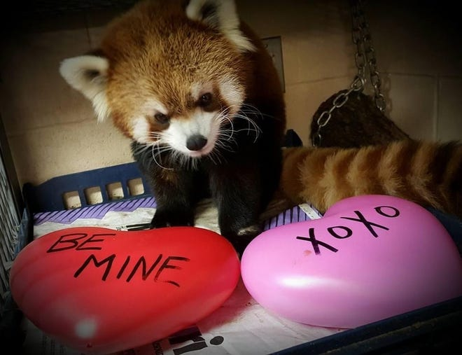 The Milwaukee County Zoo's 'Will zoo be mine?' sale allows people to send video valentines featuring their favorite animals.