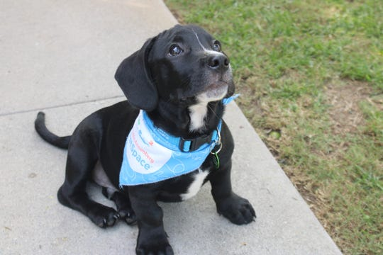 Java is a rescue puppy from Annenberg PetSpace in Los Angeles.