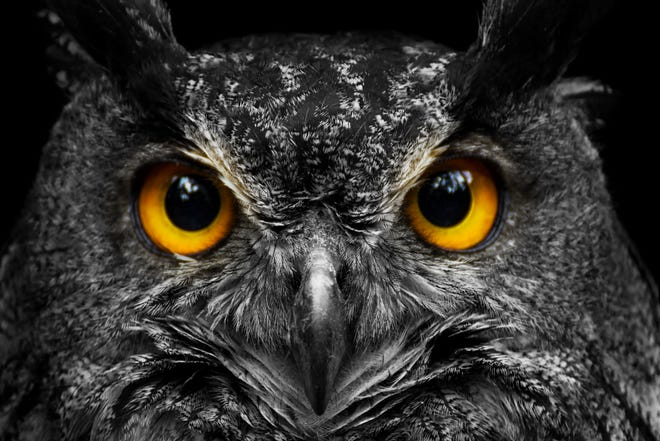 """""""Owl Prowl"""" at Petersburg National Battlefield on Friday, Oct. 15 from 6:30 - 8 p.m."""