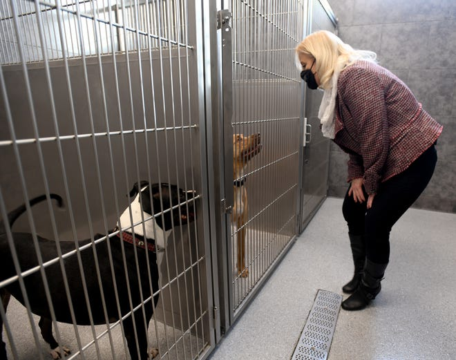 Jackie Godbey, executive director of the Stark County Humane Society, stops to talk with Ruby and Rocki as the Stark County Humane Society debuted a new wing to its facility.