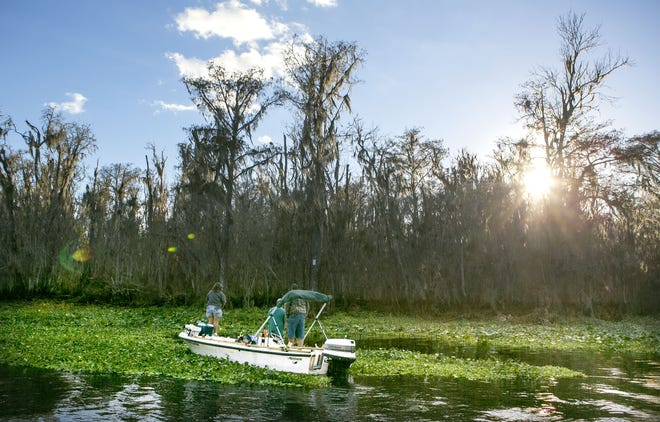 Fishermen try their luck on a more natural part of the Ocklawaha less affected by the damming of the river during a tour of the Rodman Reservoir and Ocklawaha River in December 2015. [FILE]