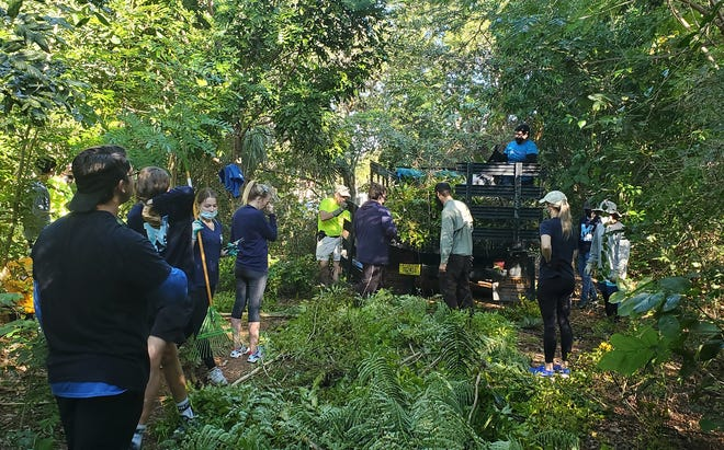 The Rotary Club of Marco Island Sunrise joined forces with its sponsored Interact Club from Marco Island Academy on a recent Saturday morning to clear and protect Otter Mound Preserve.