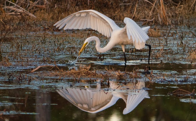 """Ardea Alba Angling"""" by local photographer Kimmie Paxton won Best of Show."""