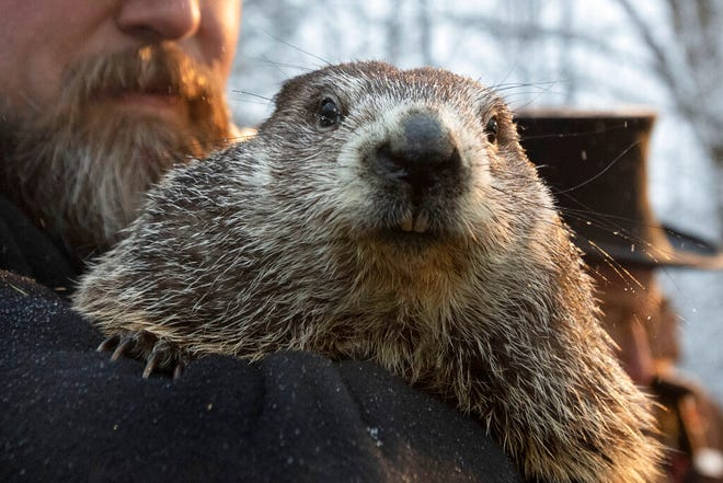FILE - In this Feb. 2, 2020, file photo, Groundhog Club co-handler Al Dereume holds Punxsutawney Phil, the weather prognosticating groundhog, during the 134th celebration of Groundhog Day on Gobbler's Knob in Punxsutawney, Pa. Due to safety precautions regarding COVID-19 transmission, the Punxsutawney Groundhog Club has said there will be no public attendance for the 2021 event. However, the club's inner circle will make the trek to Gobblers Knob on Tuesday, Feb. 2, for the 135th celebration that will be broadcast via television, internet and live-streamed. (AP Photo/Barry Reeger, File)