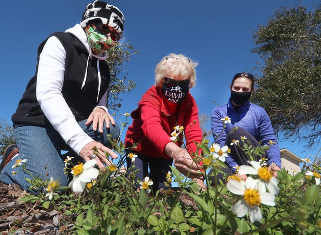 By using plants native to Florida that promote healthy life cycles for birds and provide essential items like food, shade and nesting materials, the garden will offer all the necessities for life in the area.