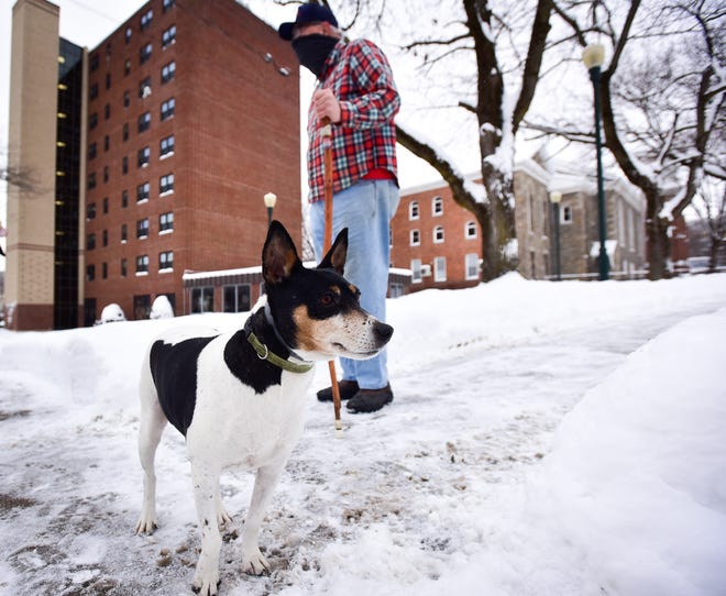 Lyric, a rat terrier, helped save a life recently when her actions brought attention to a man who had fallen near Rockton Plaza in Little Falls.