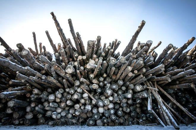 Timber is piled up to dry before shredding at Biochar Now's facility in Berthoud on Jan. 11, 2021.