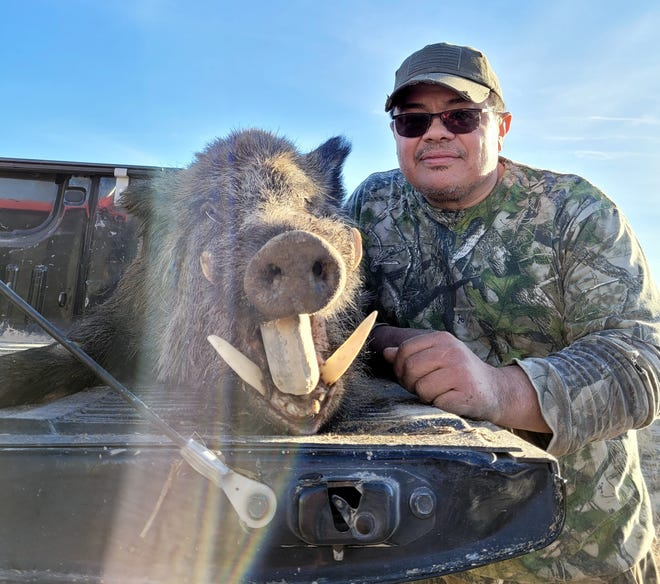 Mike Flores of Carlsbad displays a 300-pound Russian Boar during a January hunt on private lands in Texas near the New Mexican border. Nearly 200 pounds of meat was harvested from boar.