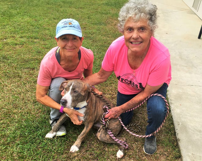 FOTAS volunteers like Jeri Wesner and Jackie Edel help walk shelter dogs every day. These dedicated folks are the lifeblood of FOTAS and the Aiken County Animal Shelter.