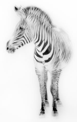 """Zebra"" by artist Gretchen Woodman of Nottingham"