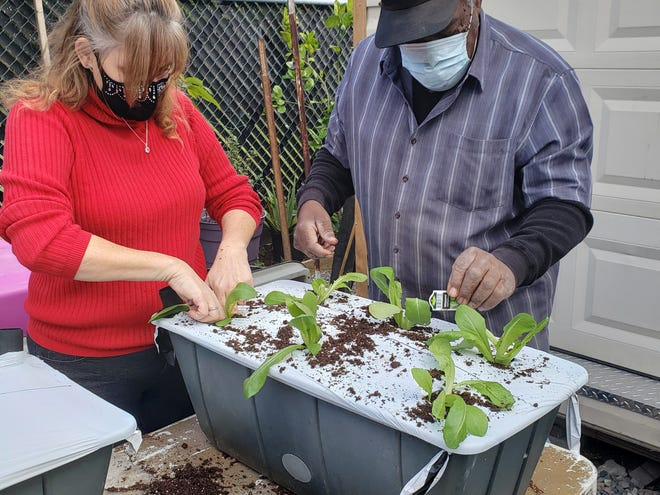 Second Chance participants prepare the first batch of seedlings in an earth box.