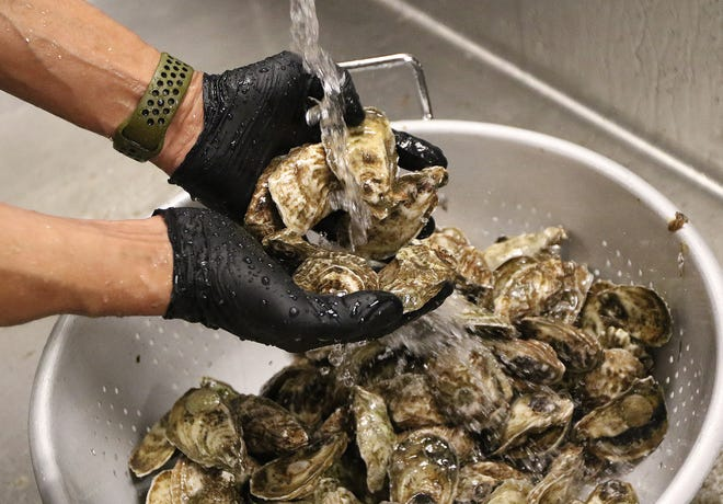 The employees of Island Creek Oyster Bar in Burlington, got the oysters ready for the upcoming dinner service, Feb. 4, 2021.