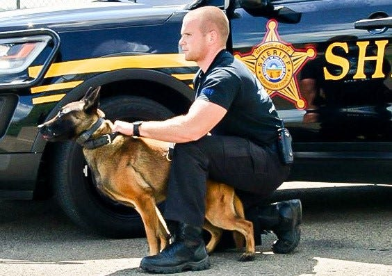 K-9 Deputy Narco and his handler, Sergeant Jeremy Archer, were photographed during a demonstrate of Narco's skills.